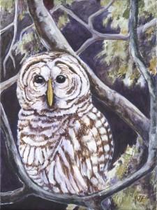 OWL IN THE OAK