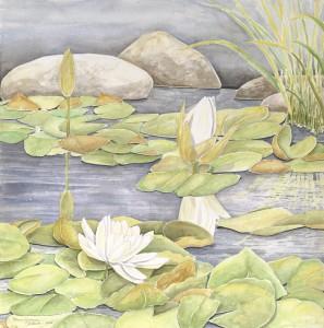 Zen Waterlilies