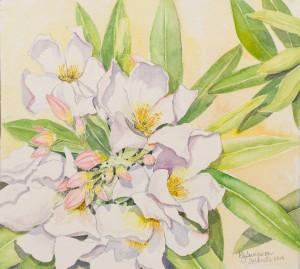 White Oleander w:c