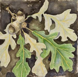 Acorns and Oak Leaves w:c